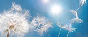 dandelion seeds set against blue sky